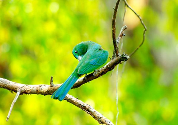 Trải nghiệm thiên nhiên kỳ thú tại vườn quốc gia nam Cát Tiên