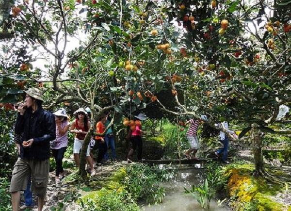 Kinh nghiệm du lịch miền Tây lễ 30-4 - Xứ dừa Bến Tre