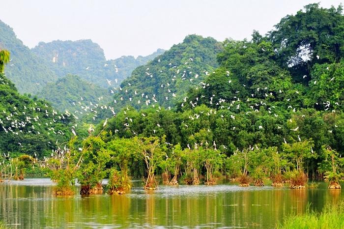 Du lịch Ninh Bình Tết ở vườn chim Thung Nham