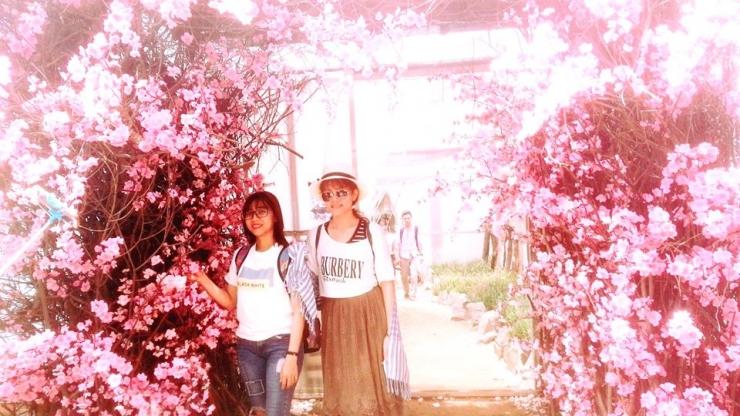 vườn hoa - khu du lịch bữu long