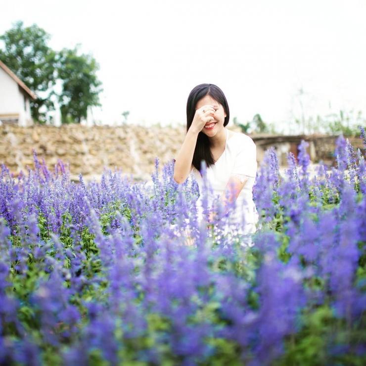 vườn hoa Salvia - khu du lịch bữu long