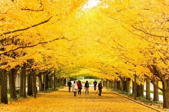 Du Lịch Hàn Quốc 5N4Đ: Seoul - Nami - Everland