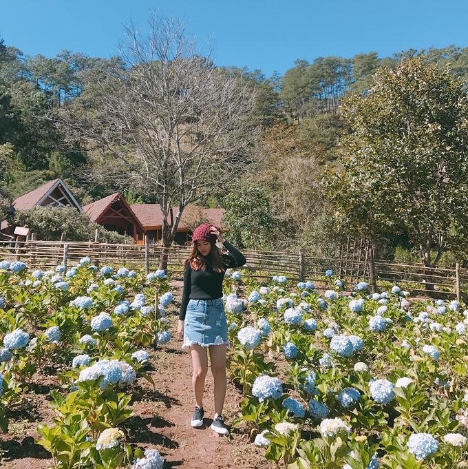 Cánh đồng hoa cẩm tú cầu ở làng Cù Lần