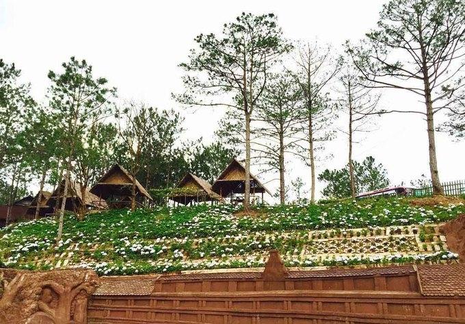 TOP 5 vườn hoa cẩm tú cầu bạn nên ghé qua khi du lịch Đà Lạt
