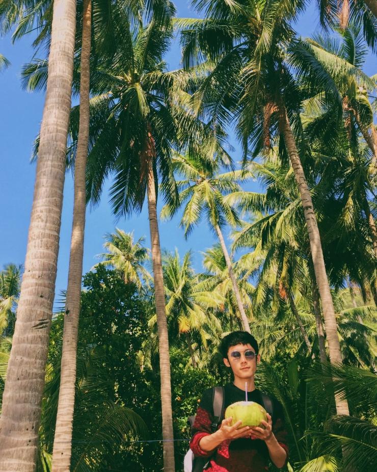 Những tán dừa