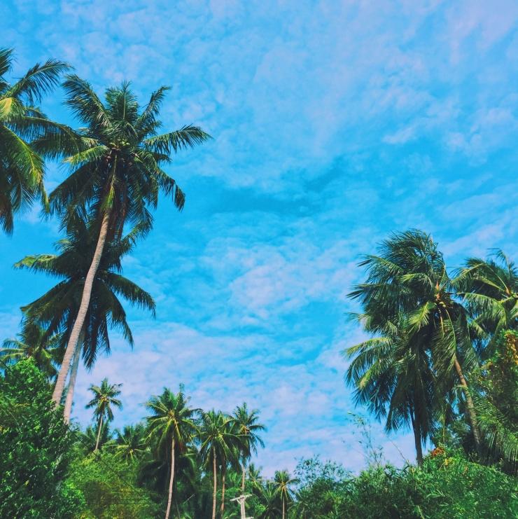 Hình ảnh thanh bình vùng nhiệt đới dưới bóng dừa