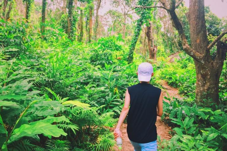 Vào sâu bên trong cánh rừng sẽ hiện ra