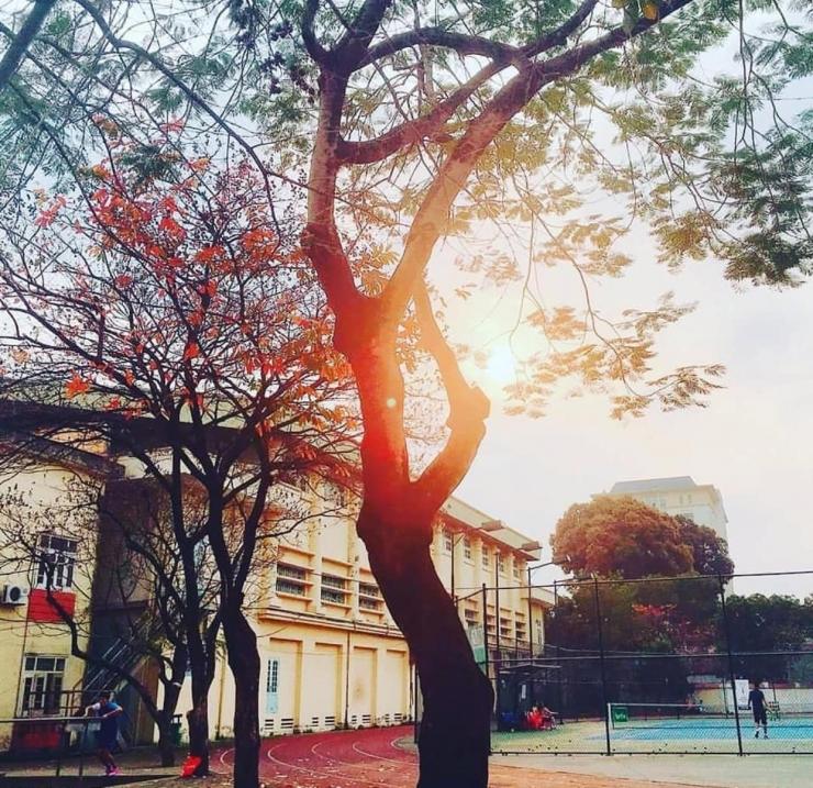 Sân thể thao trường Đại học Sư phạm Hà Nội cứ ngỡ như trong truyện ngôn tình. Ảnh @sad.wind