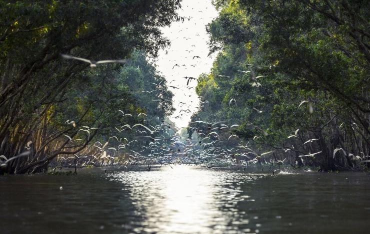 Vườn quốc gia Tràm Chim nổi tiếng với hình ảnh Sếu đầu đỏ. Ảnh Internet