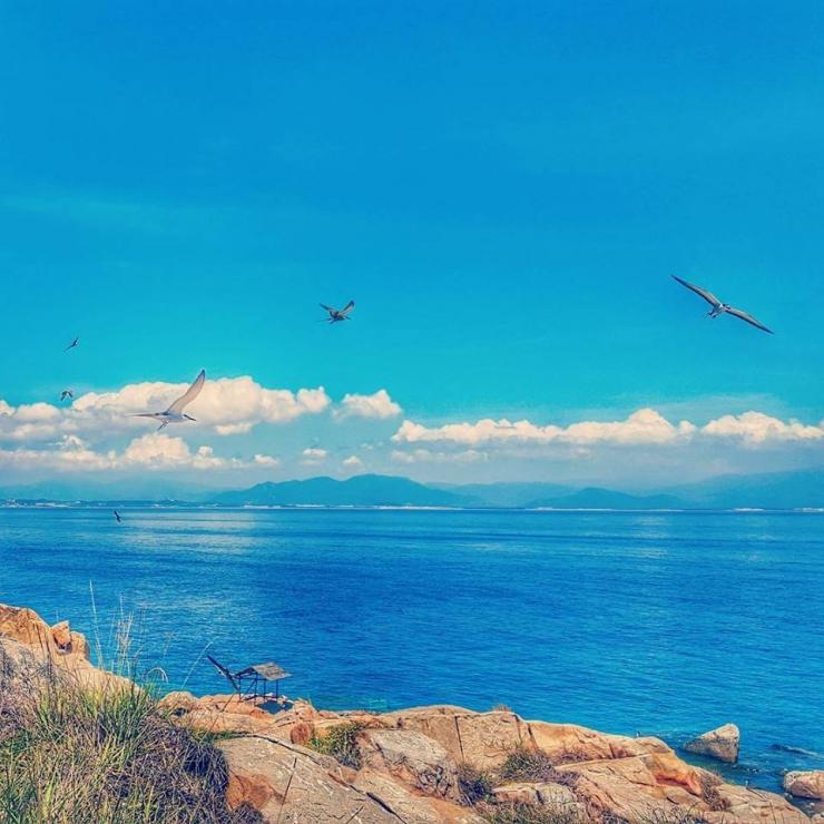Đàn hải âu bay lượn quanh trên bầu trời vẽ nên bức tranh thiên nhiên thơ lãng mạn, bay bổng