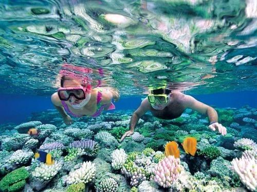Lặn ngắm san hô ở hòn Mun Nha Trang