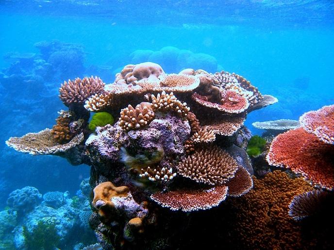 Rặng san hô ở Hòn Mun