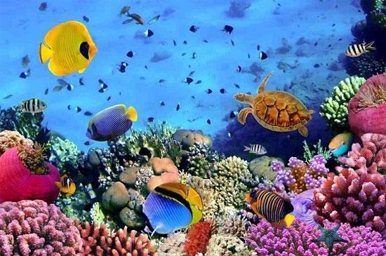 Hệ sinh vật biển ở Hòn Mun