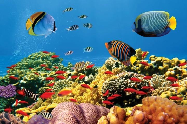 Hệ sinh vật biển ở Hòn Mun rất đa dạng và phong phú