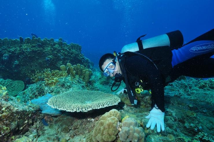 Lặn san hô Hòn Mun