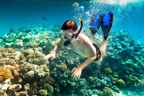 Lặn ngắm rặng san hô ở Phú Quốc
