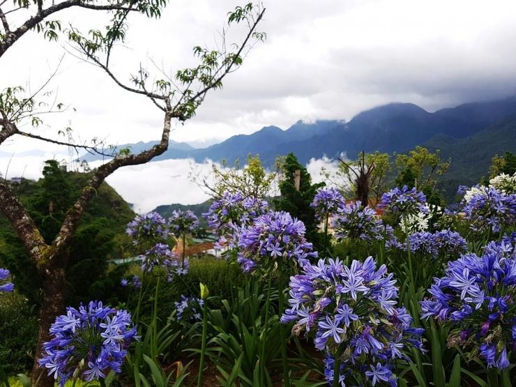 Ngoài ra còn có rất nhiều loài hoa khác tô điểm thêm vẻ đẹp mùa xuân Sapa