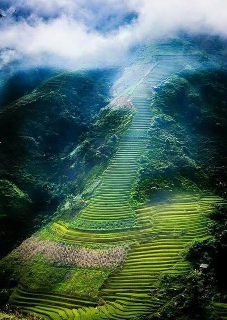 Hè Sapa là khi bạn thấy những cánh đồng ruộng lúa vàng rực cả khắp trời Tây Bắc