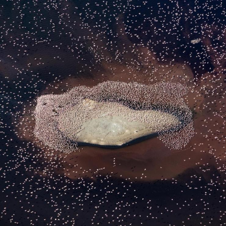 Cuộc di cư của hồng hạc trên mặt hồ Bogoria. Ảnh @stephenwilkes