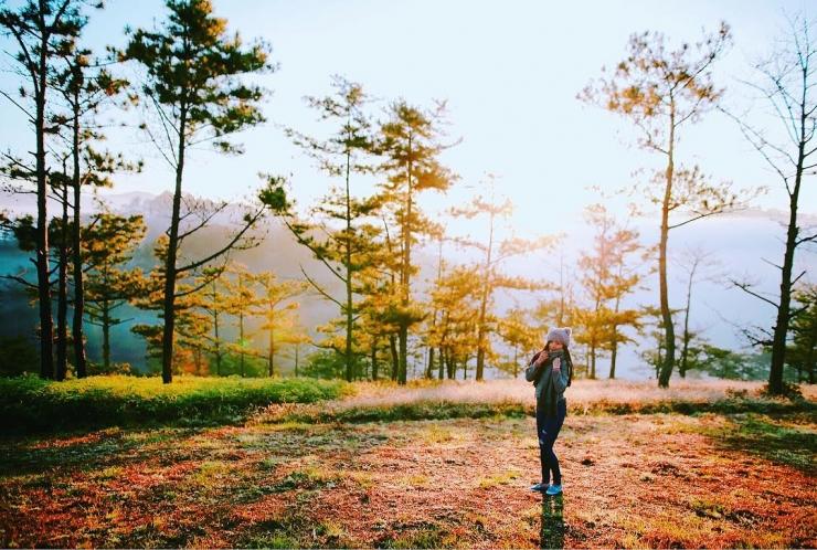 Khung cảnh bình yên trên Đồi cỏ hồng Đà Lạt đẹp như tranh