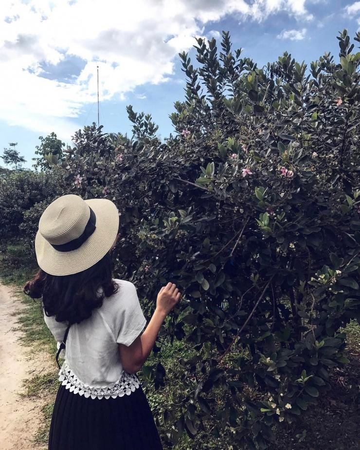Checkin tại vườn Sim Phú Quốc
