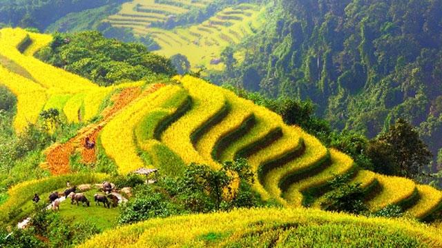 Ruộng bậc thang ở Mộc Châu