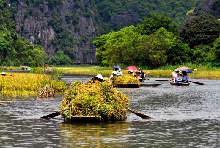 Thuyền chở đầy lúa vàng rực cả góc sông