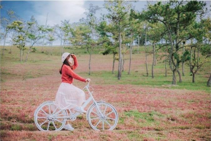 Chụp hình tại Đồi cỏ hồng Đà Lạt