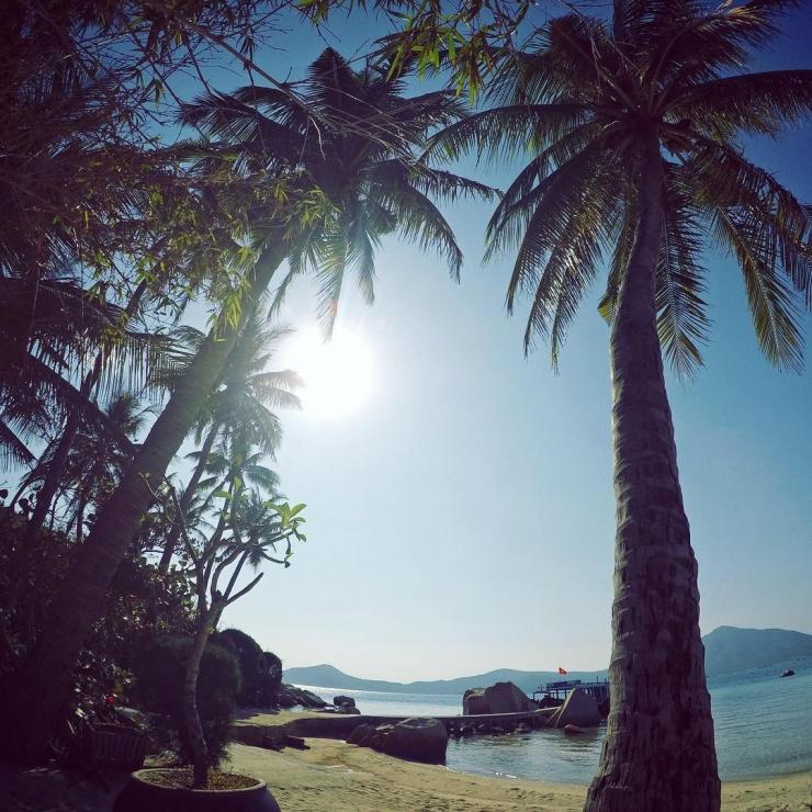 Hàng dừa xanh ngát bên bãi biển đảo Hòn Ông