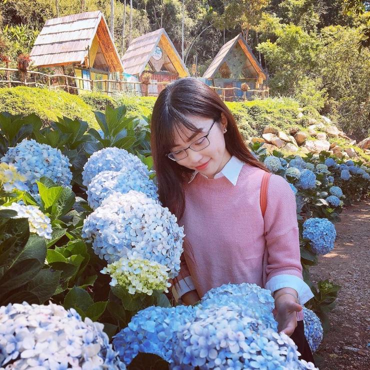 Vườn hoa cẩm tú cầu tại Hoa Sơn Điền Trang Đà Lạt