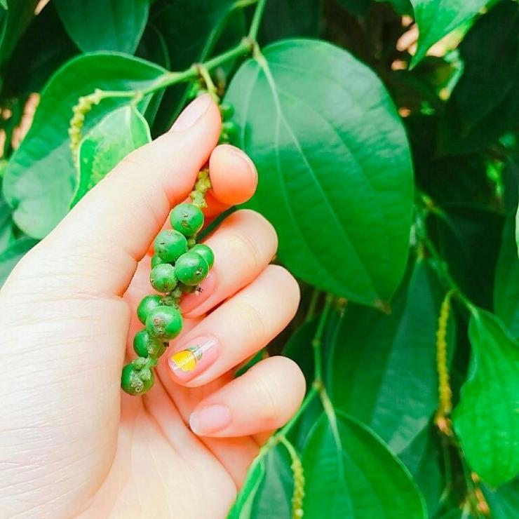 Những hạt tiêu bé bé xinh xinh