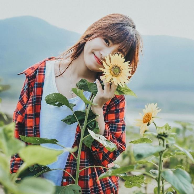 Checkin tại cánh đồng hoa hướng dương Hà Nội