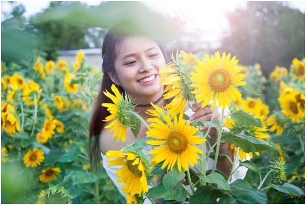 Vườn hoa hướng dương Bà Rịa