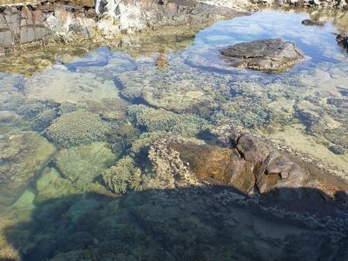 Hệ san hô đa dạng trong vườn Quốc gia Núi Chúa