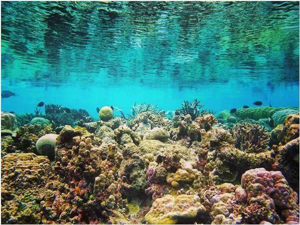 San hô đa dạng sắc màu của vịnh Vĩnh Hy