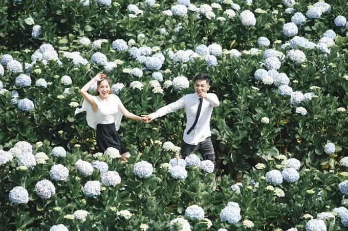 Checkin tại cánh đồng hoa cẩm tú cầu trại Mát Đà Lạt