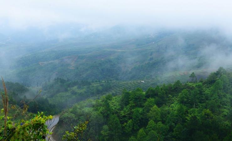 Rừng thông Yên Minh sáng sớm