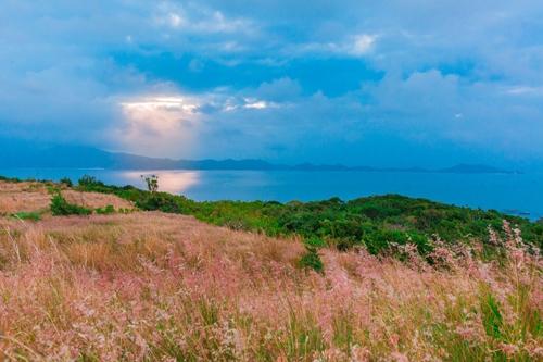 Đồi cỏ hồng Bình Ba