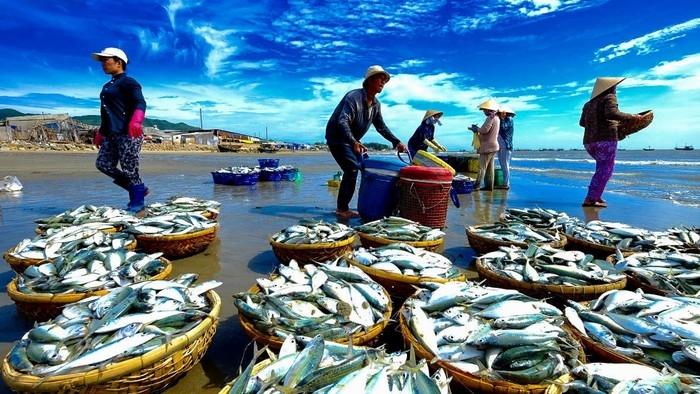 Hải sản được đánh bắt và buôn bán ngay khi cập bến