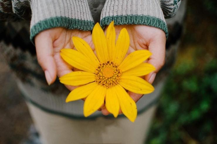 Cận cảnh bông hoa dã quỳ Đà Lạt