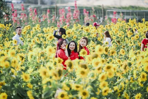 Vườn hoa hướng dương Đà Nẵng - cánh đồng hoa hướng dương Việt Nam được nhiều bạn trẻ