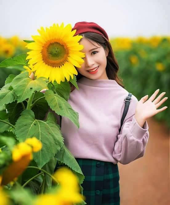 Checkin tại cánh đồng hoa hướng dương Nghệ An