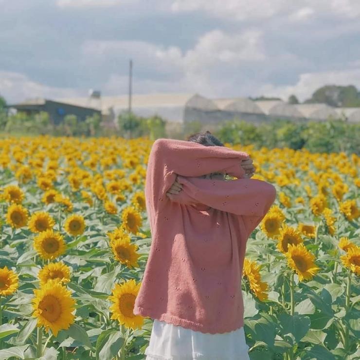 Checkin tại cánh đồng hoa hướng dương Đà Lạt