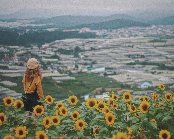 Cánh đồng hoa hướng dương Đà Lạt luôn được nhiều người thích bởi sự gần gũi mà nó mang lại