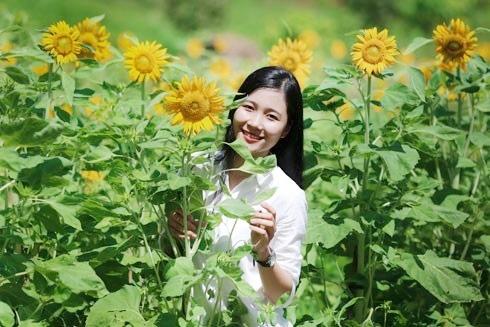 Checkin tại vườn hoa hướng dương tại Yang Bay