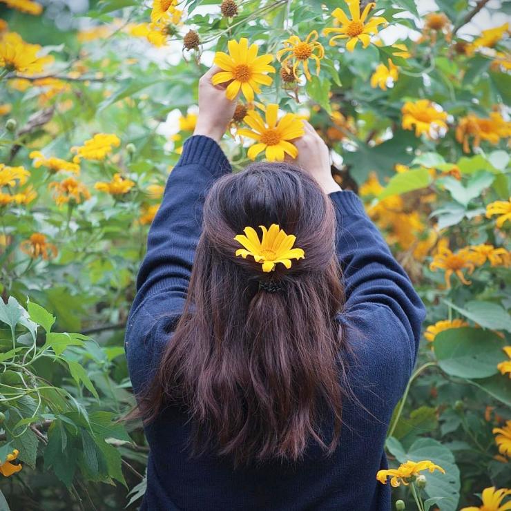 Chụp hình với hoa dã quỳ - @ngoc.quynhhhh