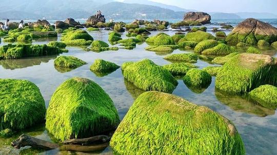 Bãi đá rêu ở rạn Nam Ô Đà Nẵng