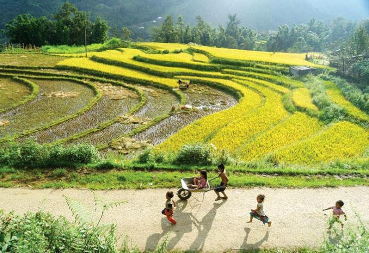 Trẻ em nô đùa dưới ánh nắng dịu nhẹ của trời thu cùng sắc vàng của những thửa ruộng khi vào mùa lúa chín