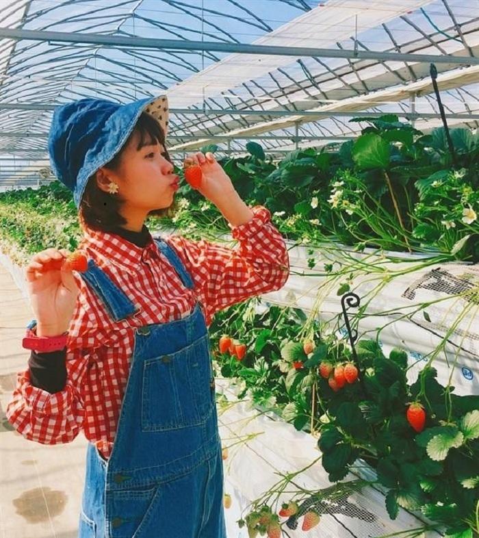 Chụp hình tại vườn dâu Đà Lạt Biofresh