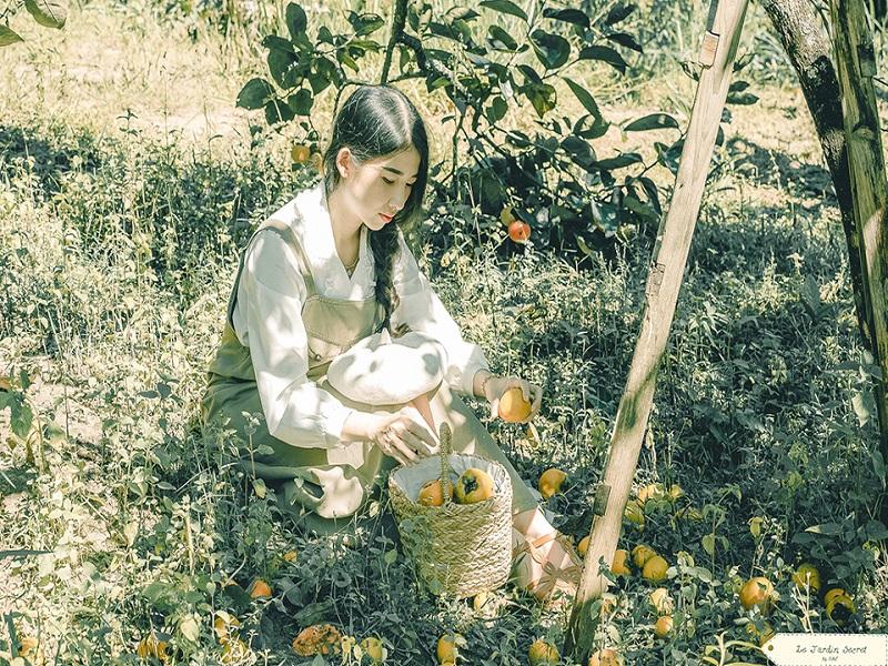 Cây hồng trịu nặng tại Sunny Farm